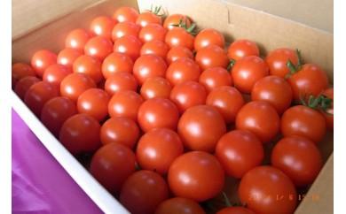 [№5850-0361]井下農園のフルーツトマト 1kg