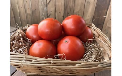 【お試し】『旬』にお届け プレミアムフルーツトマト H004-010