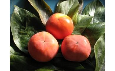 [№5850-0363]富有柿 7.5kg