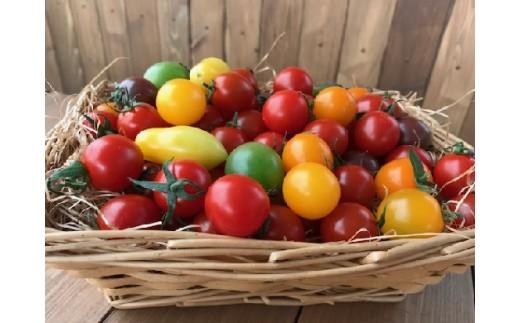 【お試し】『旬』にお届け まるでトマトの宝石箱!ジュエリートマト H004-009