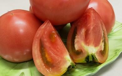 [№5850-0343]ホウナンの大玉トマト 約4kg