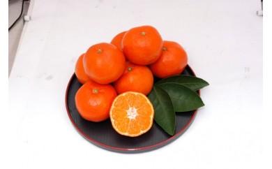 [№5850-0364]香川県オリジナル品種 小原紅早生みかん 5kg