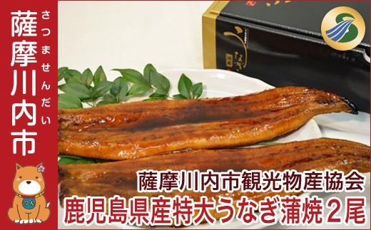 B-020 特大うなぎ蒲焼 2尾セット 【数量限定!!!】