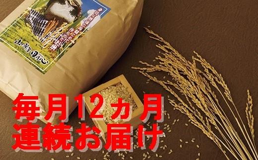 T202 《定期便》直前精米長崎ヒノヒカリ白米(8㎏)を毎月12回お届け【4,800pt】