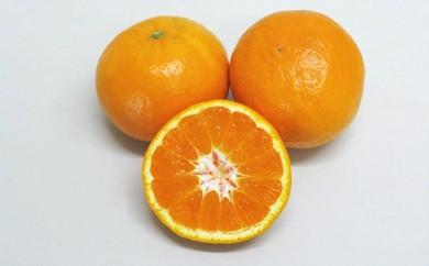 [№4631-1550]新品種の希少な柑橘!「はれひめ」 約5kg