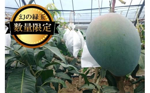 【数量限定】幻の緑玉 大宜味村キーツマンゴー【2019年発送】