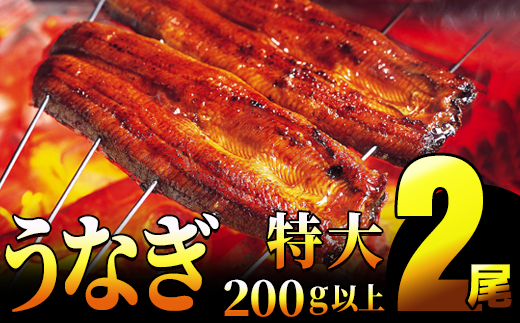 YS001【一尾200g以上!×2尾】特大!肉厚!特選うなぎ