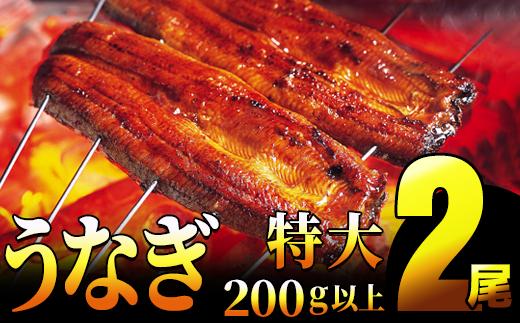 【一尾200g以上!×2尾】特大!肉厚!九州特選うなぎ