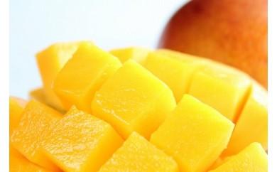 南国の恵み完熟マンゴー<ご家庭用>約1kg【先行予約】