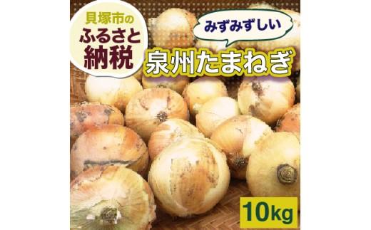 B0013.泉州玉葱 約10kg【数量限定】