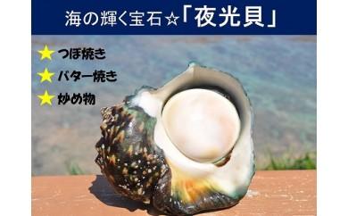 【和泊産】店主が素潜りで獲った夜光貝