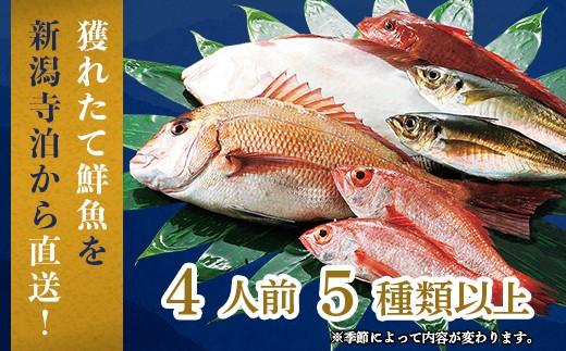 季節の鮮魚セット4人前(5種類以上入り)
