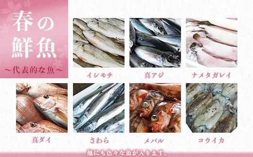 春の鮮魚 ~代表的な魚~ ※他にも色々な魚が入ります。
