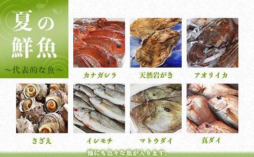 夏の鮮魚 ~代表的な魚~ ※他にも色々な魚が入ります。
