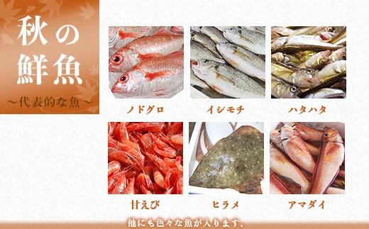 秋の鮮魚 ~代表的な魚~ ※他にも色々な魚が入ります。