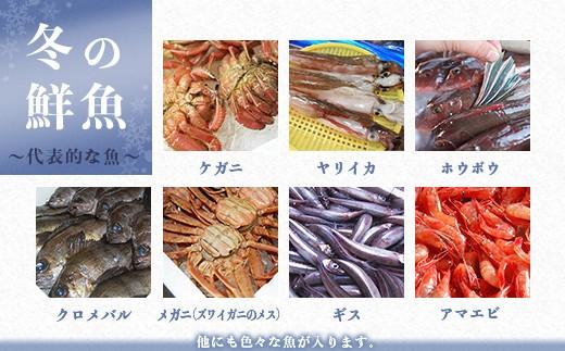 冬の鮮魚 ~代表的な魚~ ※他にも色々な魚が入ります。