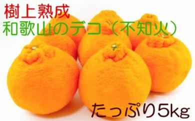 [№5745-2370]樹上熟成和歌山のデコ(不知火)たっぷり約5kg