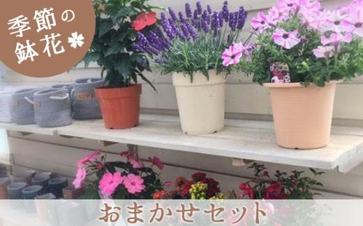 J-1 季節の鉢花「おまかせセット」