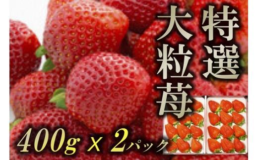 B776 特選大粒苺 約800g(400gx2パック)【一段平パック入り】