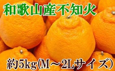 [№5745-2358]【春柑橘の代表格】和歌山の不知火(デコポン)約5kg