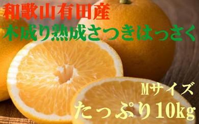 [№5745-2373]和歌山有田木成り熟成さつき八朔たっぷり10kg(Mサイズ)