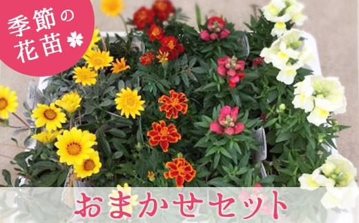 季節の花苗を20~24ポットお届けします。