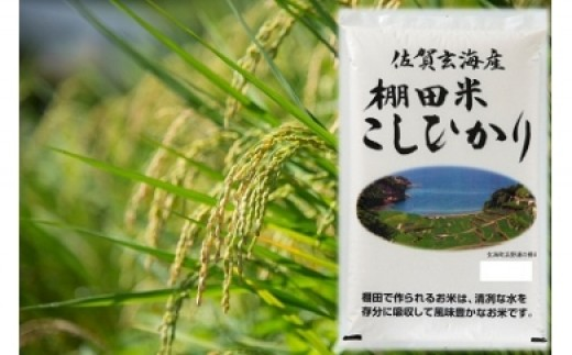 佐賀玄海産棚田米こしひかり 6kg