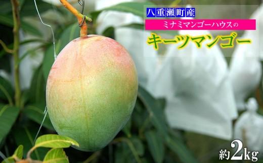 【2019年発送】ミナミマンゴーハウスのキーツマンゴー約2kg