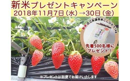 A10 愛東いちご 化粧箱入〔髙島屋選定品〕