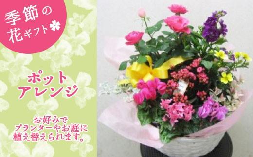 J-5 季節の花ギフト(ポットアレンジ)