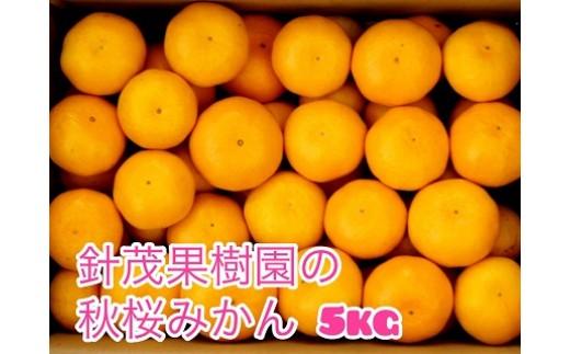 M-63 秋桜みかん 5kg