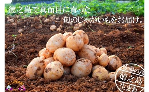 """116【先行予約】~春の訪れを告げる~徳之島プレミアムブランド""""春一番じゃがいも""""(10kg)"""