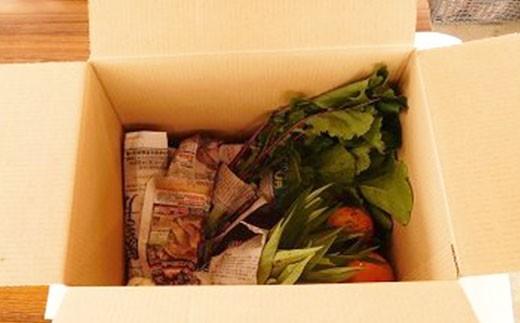 ガバレ農場の季節の有機野菜詰め合わせセット3