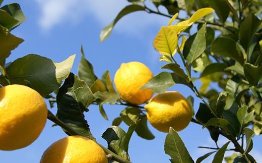 大崎上島町産のレモンを使用しています