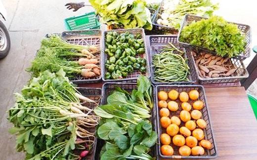 ガバレ農場の季節の有機野菜詰め合わせセット4