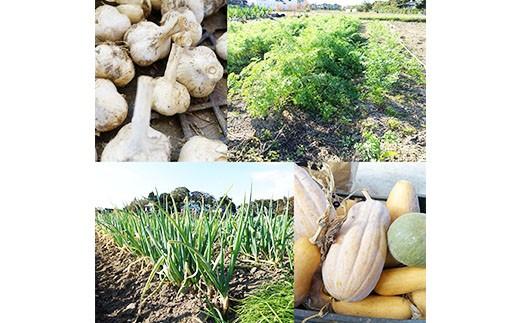 ガバレ農場の季節の有機野菜詰め合わせセット5