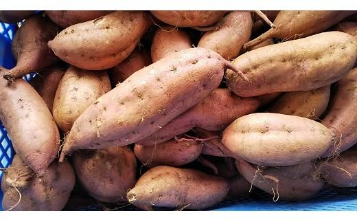 和喜雄さんといつみさんの「甘美な安納芋」3kg_iio-394