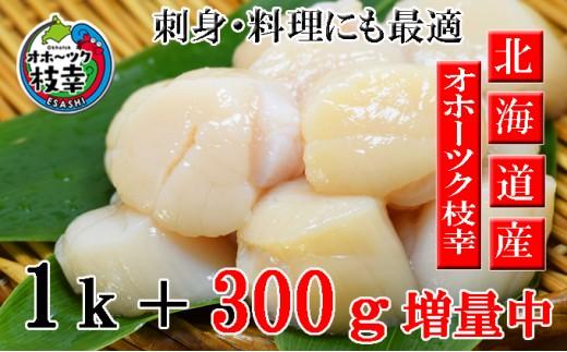 [№5708-0533]美味特選お刺身生ほたて貝柱増量1.3kg(50~80玉)オホーツク枝幸産