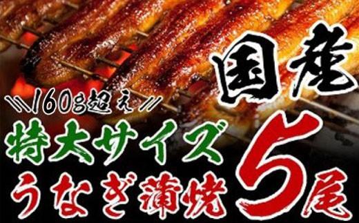 B15 ★迫力満点★うなぎ蒲焼(長焼5尾入)