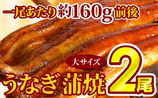 B-215 厳選!!「特上うなぎ蒲焼き」 大サイズ2本!