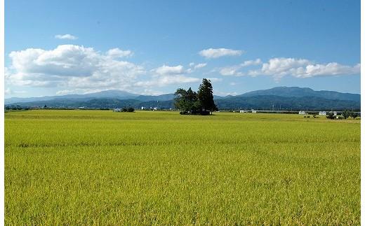 『山形産はえぬき』は、肥沃な土壌と気象条件に恵まれた山形県の西村山地域を流れる清流「寒河江川」により育まれた美味しいお米です。