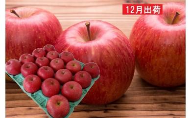 [№5823-0449]山形県産 サンふじ約5kg(秀・16~20玉)