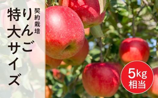 FT18-019 【玉川村】 契約栽培 りんご 特大サイズ 約11~13玉 (5kg相当)