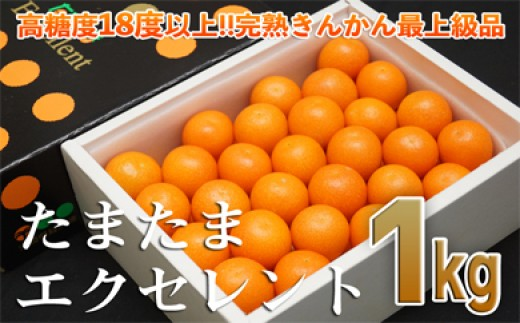 1.1-110 【先行予約・数量限定】宮崎県 西都市産 完熟金柑 たまたまエクセレント 1kg
