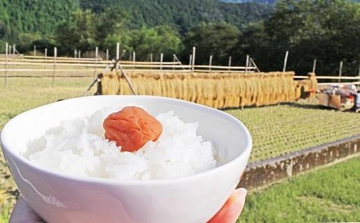 【新米】仁淀ブルーの恵み 稲木干し 「おち米」 10㎏