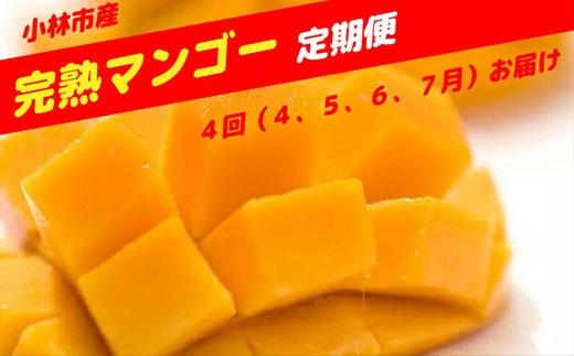 【定期便】小林市産「高級完熟マンゴー」コース 30-1502