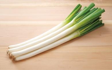 [№5834-0204]役に立ちます 冷凍カット野菜 長ねぎ1/4分×28袋