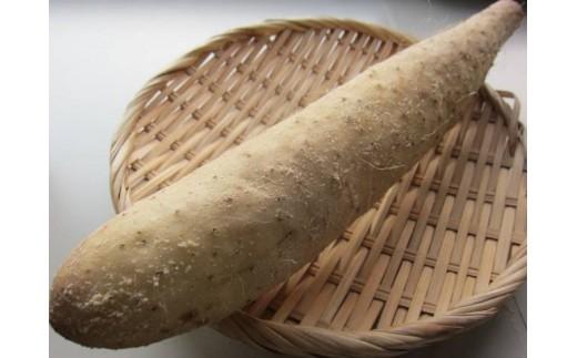 [0723](生産者直送)大和芋×長芋「ネバリスター」2kg(吉川農場)