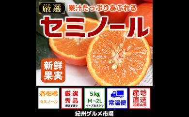 [№5745-2245]果汁たっぷりセミノール(秀品) 5kg (M~2L)