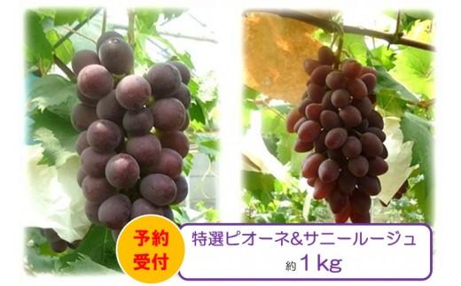 B-136.アガタ果樹園 特選ピオーネ&サニールージュぶどうセット【数量限定】
